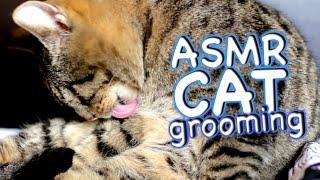 ASMR Cat - Grooming #24