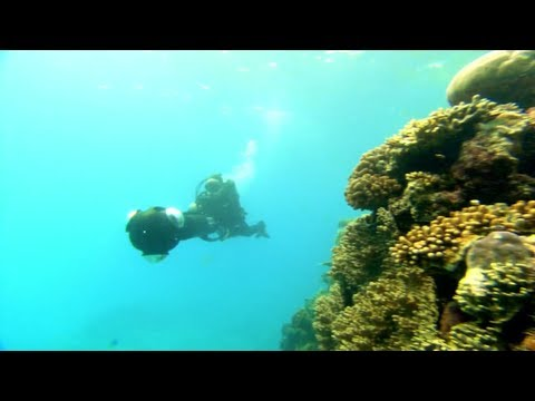 Google+: Catlin Seaview Survey Underwater Hangouts On Air