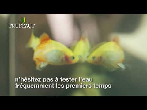 Comment introduire les poissons dans un aquarium ? - Jardinerie Truffaut TV