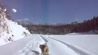 青空の元、新雪の中で寝転ぶのはとても気持ちが良いのですが、 かい(北...