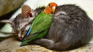 Parrot Playing with Kittens