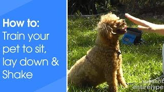 How To Train Your Pet To Sit, Lay Down & Shake Hands