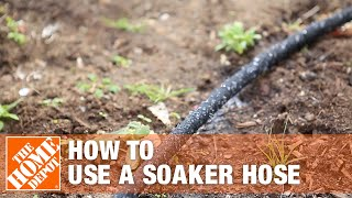 Why Should You Use a Soaker Hose? | The Home Depot