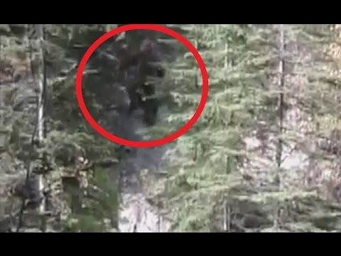 Bigfoot Caught On Tape | Survivorman: Bigfoot