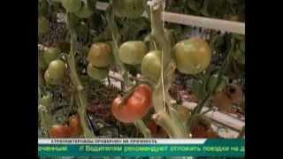 Губернатор собирается посетить все крупные агропромышленные предприятия области(, 2014-02-06T13:53:27.000Z)