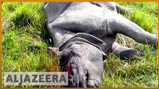 🦏 🇮🇳 Kaziranga park fights to save India's endangered one-horned rhino   Al Jazeera English