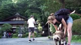 ラグドールが外国人観光客をおもてなし thumbnail