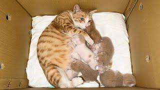 流浪猫带着五只宝宝求收养一家六口搬进新家那刻母猫感动落泪