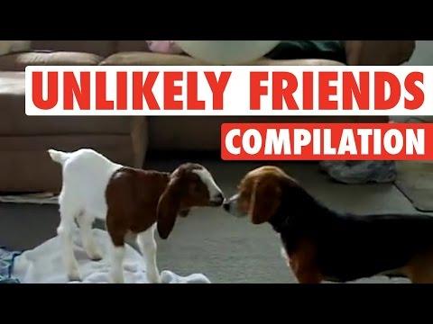 Weirdest, Coolest Pet Friend Combos (Fun Compilation!)