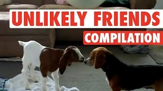 Weirdest, Coolest Pet Friend Combos (Fun Compilation!)