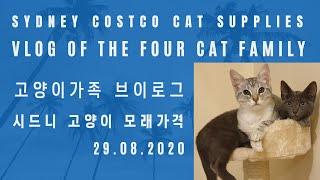 [Four Cat Family Vlog] 시드니 코스트…