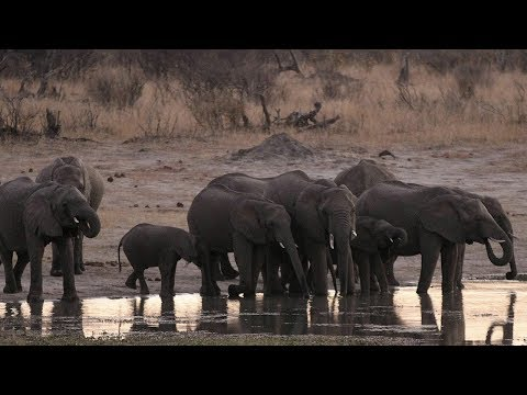 Activists truck 9,000 hay bales into Zimbabwe national park as drought leaves over 70 elephants dead