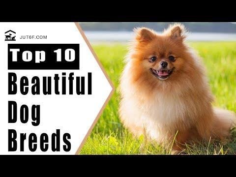 Beautiful Dogs - Top 10 Most Beautiful Dog Breeds
