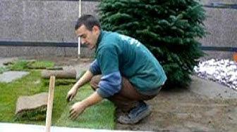 Полагане на тревен чим - райграс на руло - готова трева