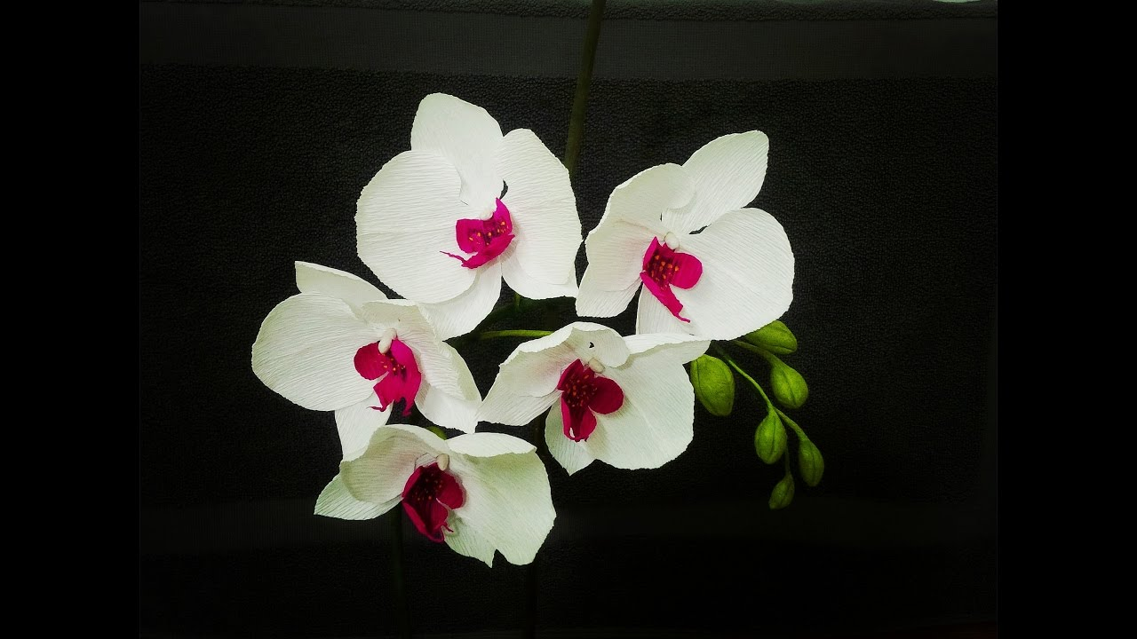 How To Make Phalaenopsis Orchid From Crepe Paper Craft Tutorial