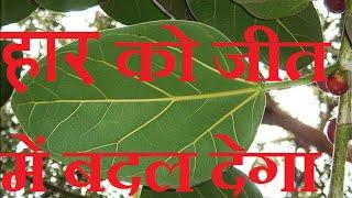 बेमिसाल टोटका जो बदल देगा आपकी हारी बाजी को जीत में Bemisal Upay Badel Dega Apki Haari Baaji ko