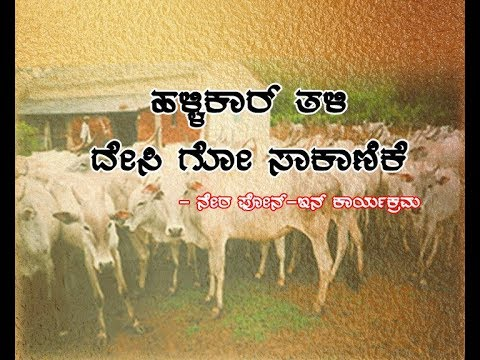 Hallikar variety indigenous dairy farming-ಹಳ್ಳಿಕಾರ್ ತಳಿ ದೇಸಿ ಗೋ ಸಾಕಾಣಿಕೆ