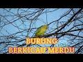 Merdunya Suara Burung Berkicau Di Alam Bebas Untuk Relaksasi   Mp3 - Mp4 Download