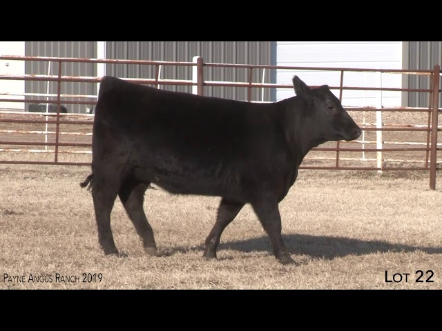 Payne Angus Ranch Lot 22