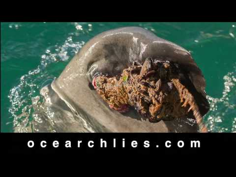 OCEARCH: Permanent Damage
