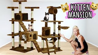 BUILDING MY KITTENS THEIR DREAM HOUSE!! (AWESOME)