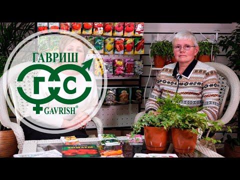 Семена от агрофирмы Гавриш. Hitsad Media
