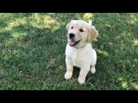 Tips and Tricks to raising a well mannered puppy