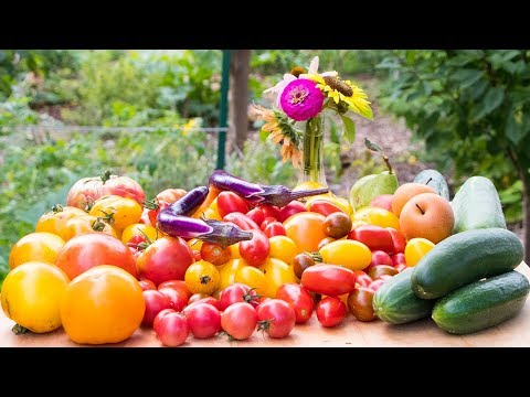 Epic Harvest In Small Space, BACKYARD Food Forest