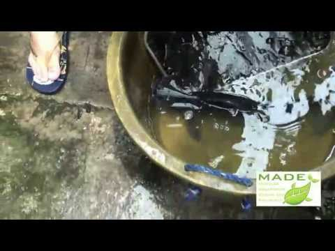 Pangasius, King Fish (Red Tilapia) Breeding, Solar Power, Aquaponics Philippines, August 2012 Update