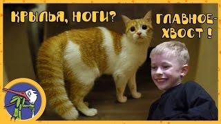 Макс и его друг котик Рыжик играют вместе