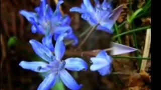 """Nancy CUOMO in """"In un fiore"""" (Mogol/Donida) 1966"""
