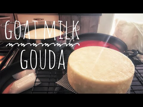 Goat Milk Gouda - Cheesemaking At Home