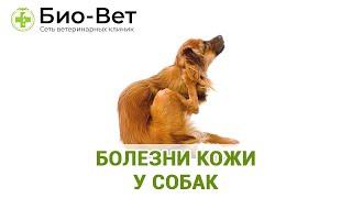 Болезни кожи у собак. Ветеринарная клиника Био-Вет.