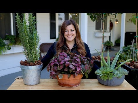 How to Bring Your Plants Inside to Overwinter! 🌿// Garden Answer