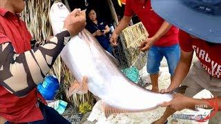 FISHING . NHỮNG CON CÁ TRA TRÊN 15K ĐƯỢC GIẢI LỚN TRONG CÁC CUÔC THI