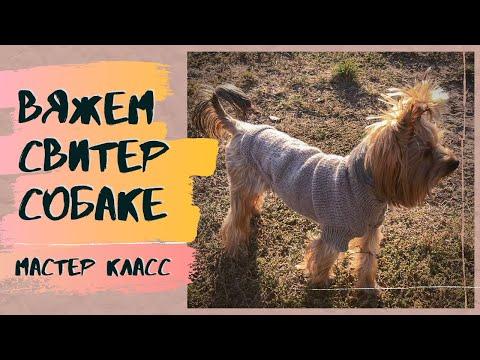 Вязание спицами одежда для собак своими руками для начинающих