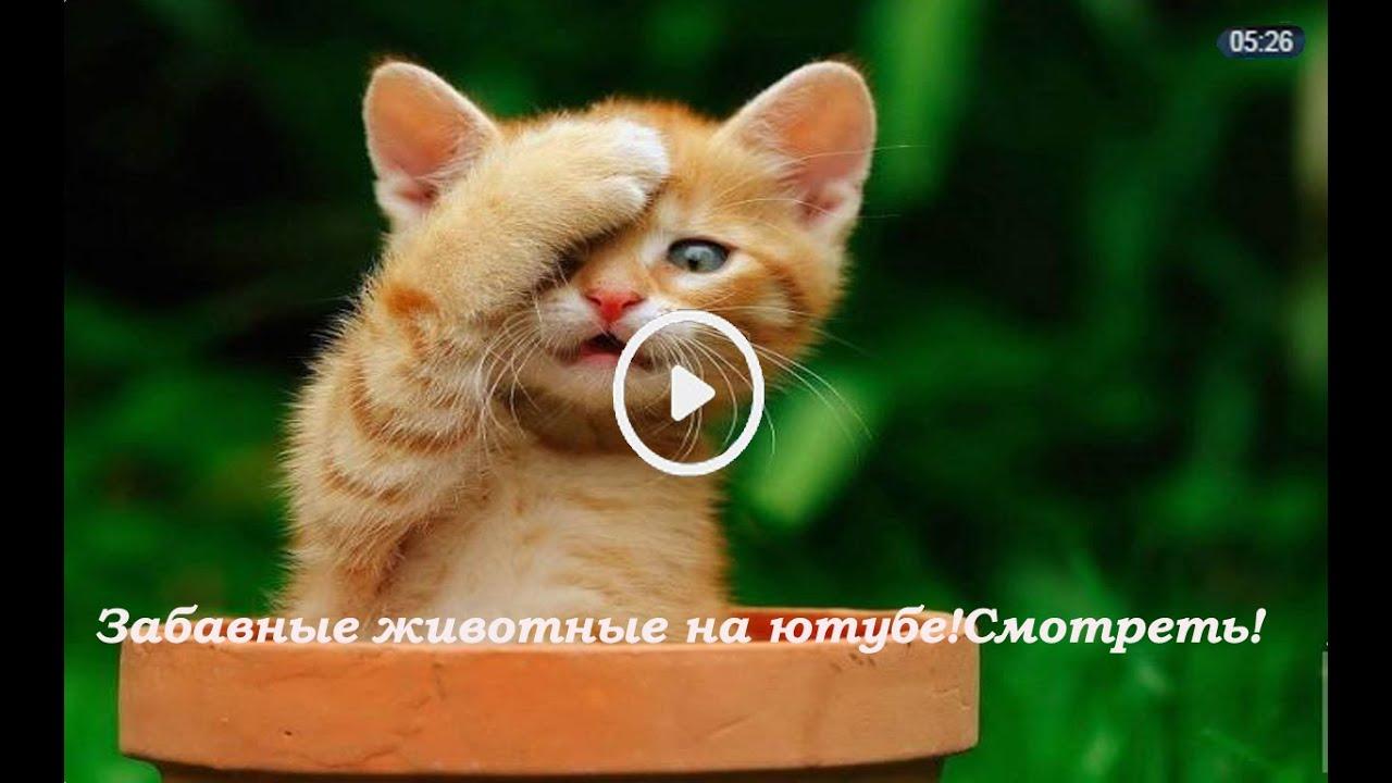 Hugging, video, смешные коты геи целуются