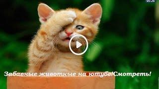 Забавные животные на ютубе!Смотреть!(Funny Animals on YouTube! Watch!)