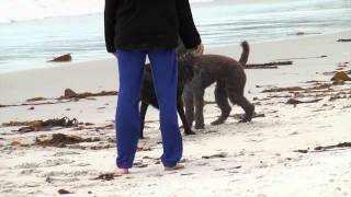 Pet Friendly Carmel By The Sea|Carmel CA Hotels|Monterey Bay