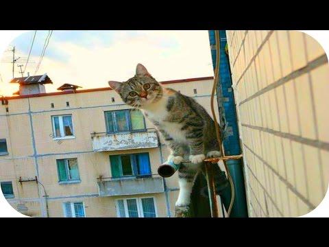 Забавные Кошки! Смешное Видео с Кошками! Funny Cats Video Compilation /