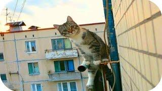 Забавные Кошки! Смешное Видео с Кошками! Funny Cats Video Compilation /(Забавные Кошки! Смешное Видео с Кошками! Funny Cats Video Compilation / https://youtu.be/JwlMbTA_JeE ..., 2015-09-29T22:59:22.000Z)
