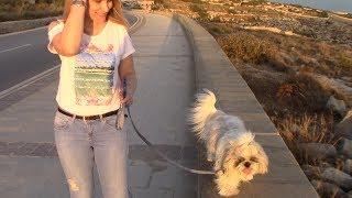 Первые прогулки. Как приучить щенка к туалету на улице?