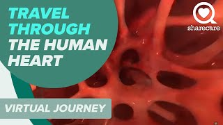 Travel Through the Human Heart Using Virtual Reality thumbnail
