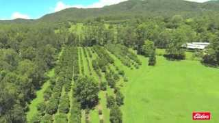 Property for Sale in Conondale - 897 Aherns Road