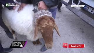 Hayvan Pazarı - İvesi Damızlık Koyun Fiyatı  / Adana - 2018