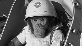 Что случилось с Хэмом в космосе? ( Грустная история Хэма )