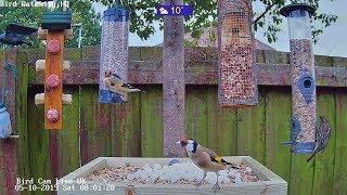 ROUGH CUT! ~ UK Bird Feeder Cam via ©BirdWatchingHQ, Ohio