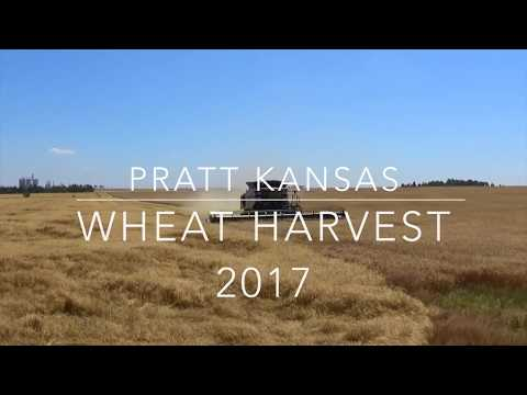 Wheat Harvest near Pratt Kansas