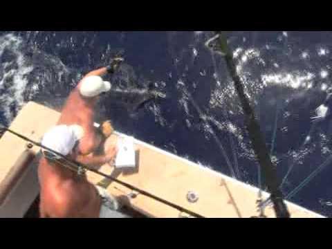 Bermuda Triple Crown Marlin Footage