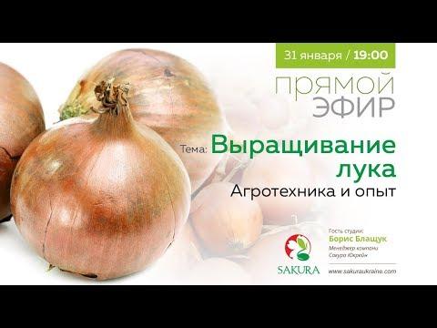 Выращивание лука. Агротехника и опыт | Прямой эфир